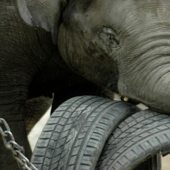 Elefant (Dominik Moser)